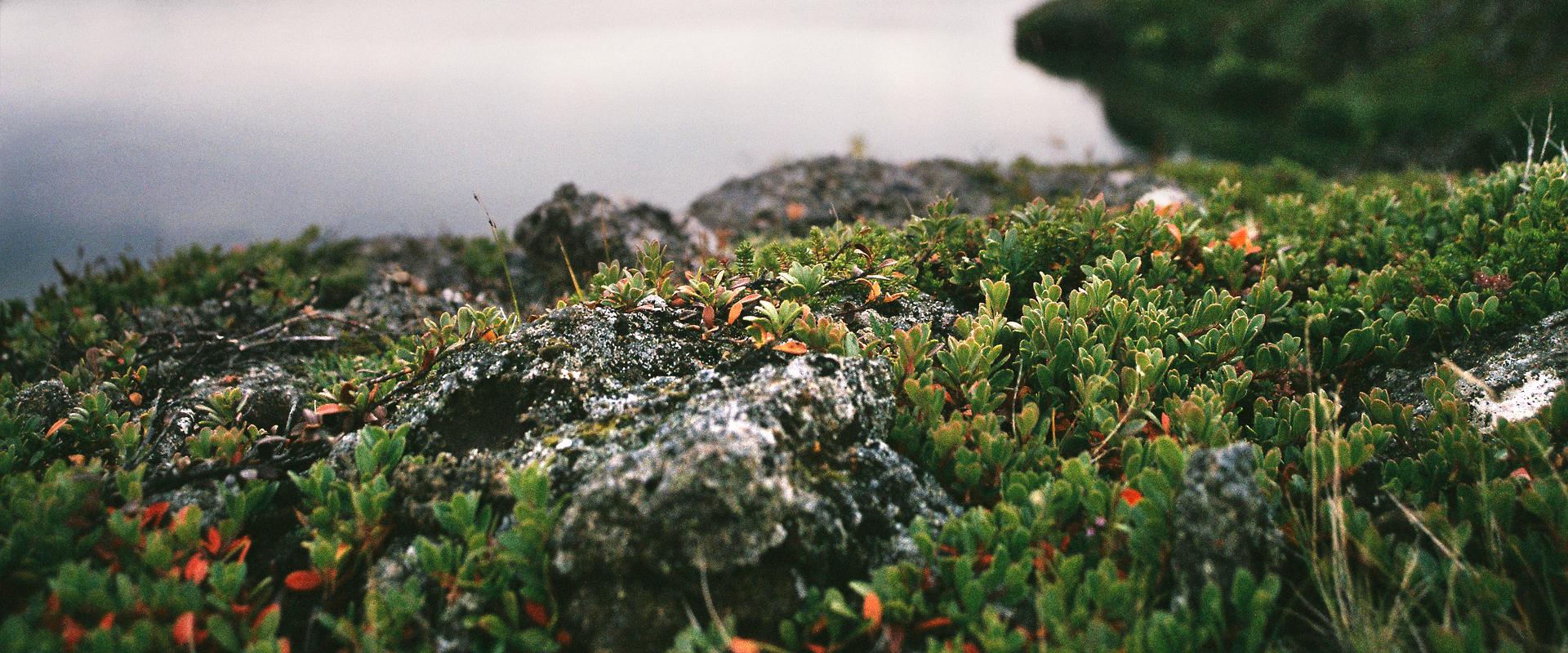 islande-hello-adventures-87-kalfastrond-ae1-wide